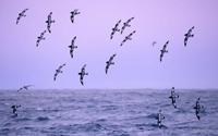 Câu chuyện về những chú chim biển